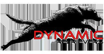 Dynamic Retrievers